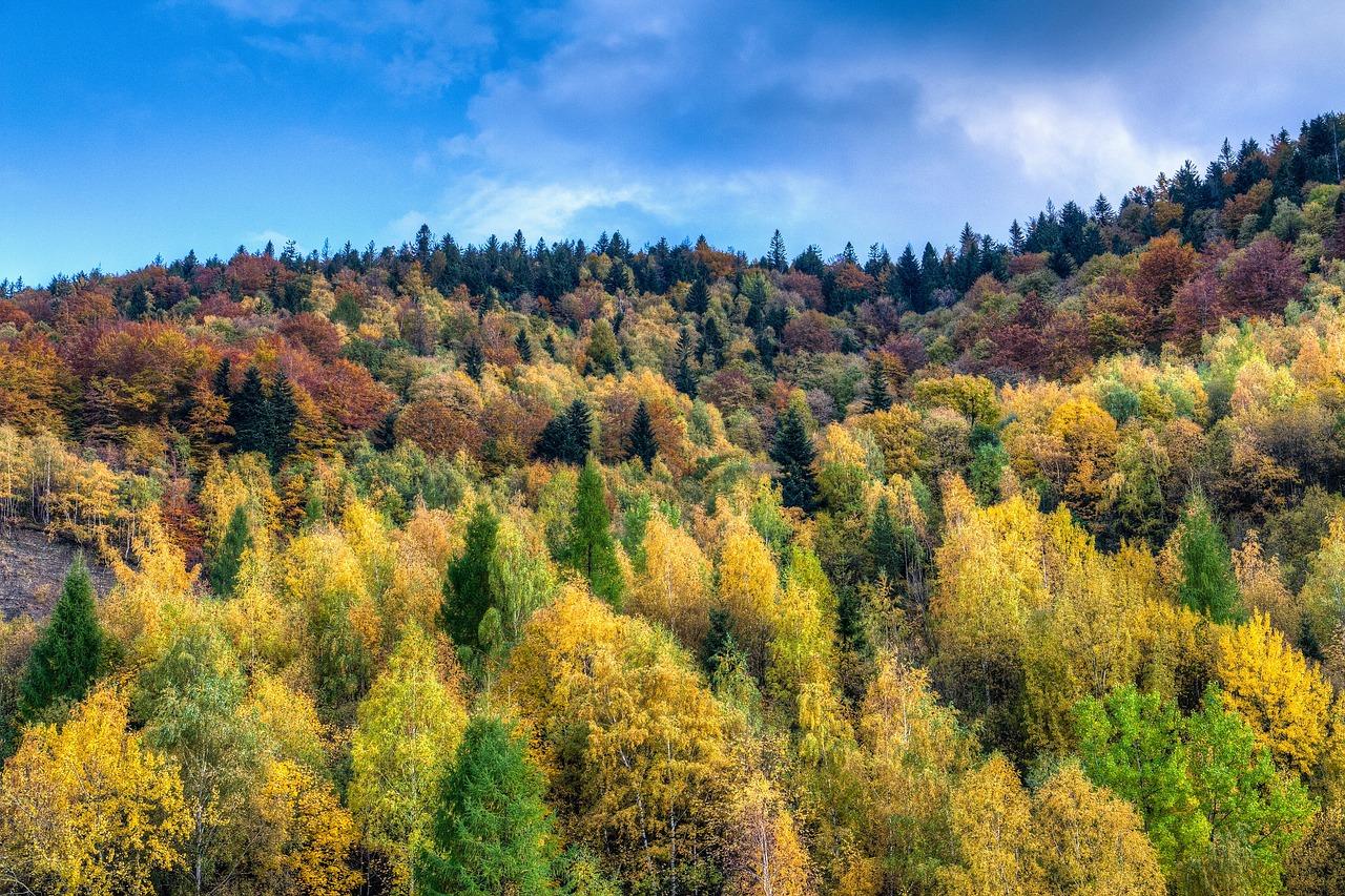 Зона леса картинки