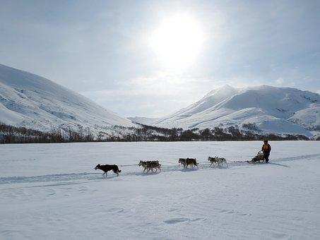 Dog, Laika, Husky, Race, Sleds