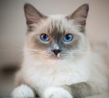Zadarmo Teen mačička vids