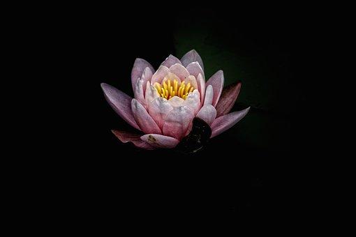 Dark pink flowers images pixabay download free pictures dark pink flower petal bloom mightylinksfo