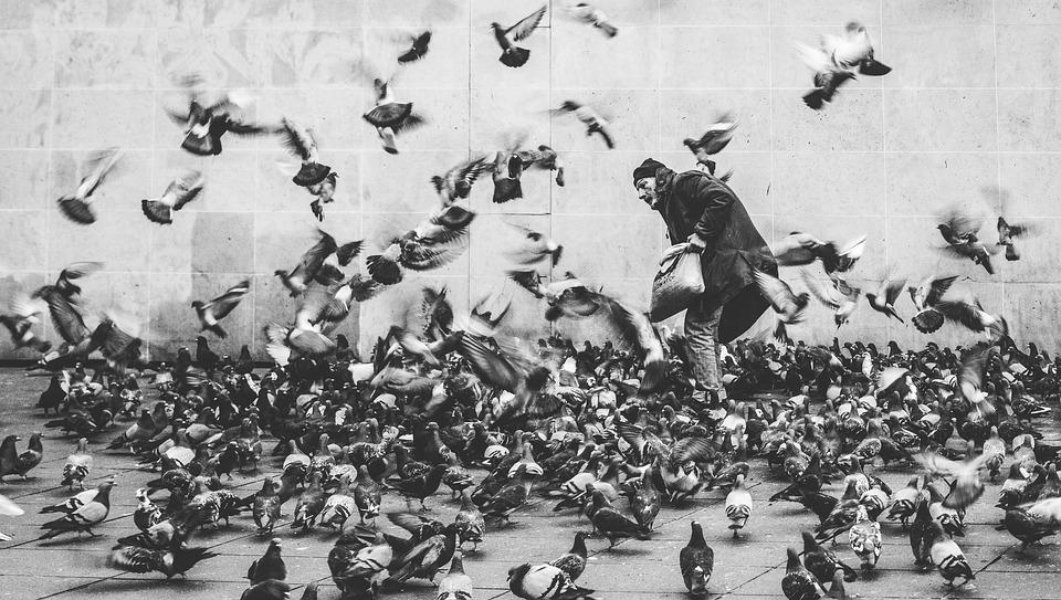 biely muž vtáky
