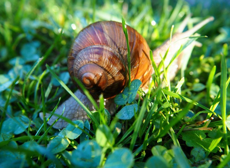壳, 蜗牛壳, 性质, 螺旋, 软体动物, 动物, 爬行动物, 住房, 花园里