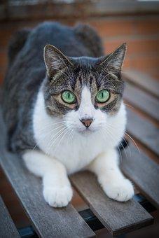 Katze, Kätzchen, Haustier, Katzen, Tier