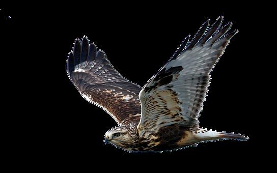 Jastrząb Zdjęcia Pixabay Pobierz Darmowe Obrazy
