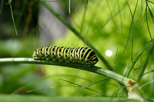 Caterpillar Images Pixabay Download Free Pictures