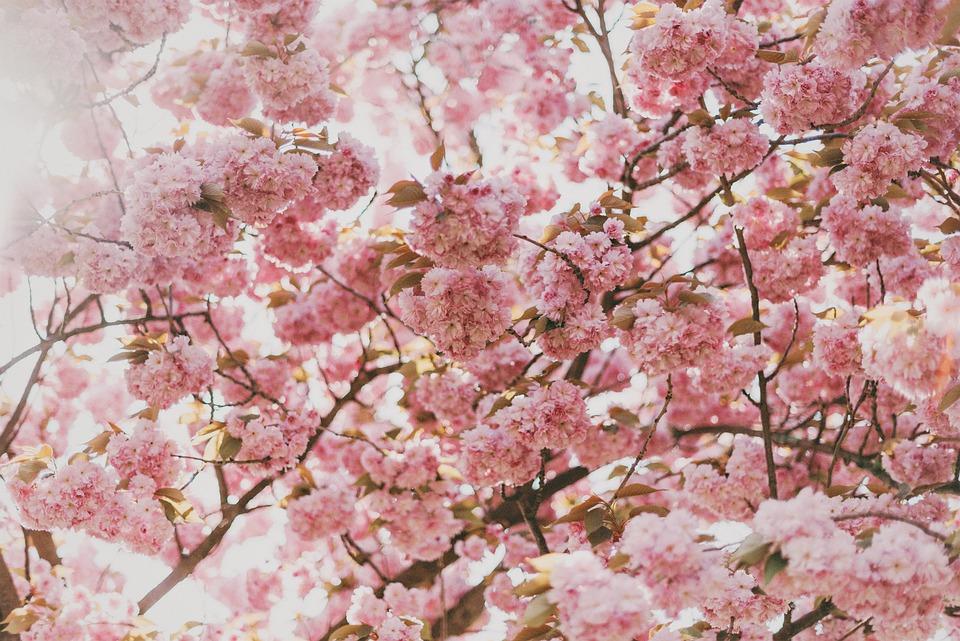 blomster træer