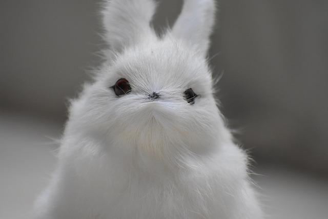 Vacaciones Conejo Suav...