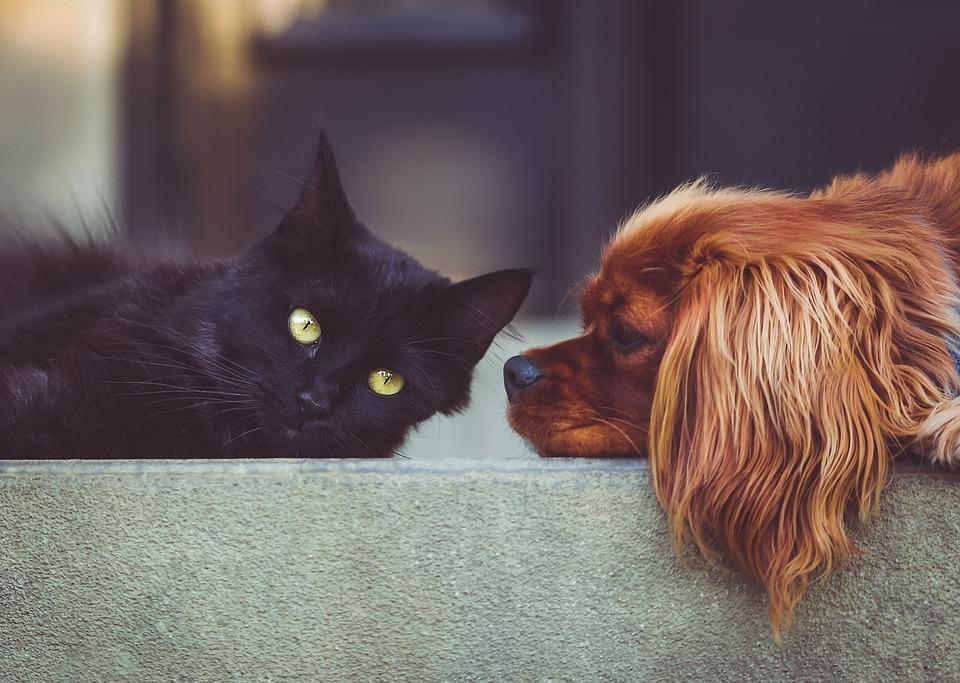 犬, 猫, ペット, 動物, お友達と