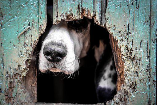Animals, Dogs, Domesticated, Pets, Eyes