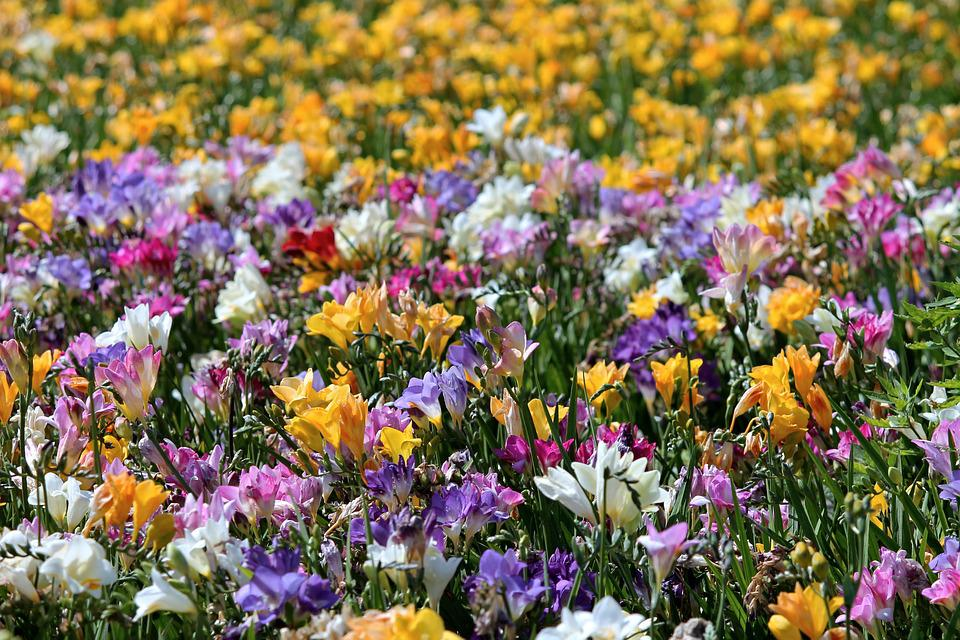 flores de recuperación