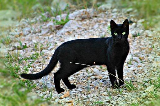 Cat, Watch, Is Watching, Fauna, Kitten
