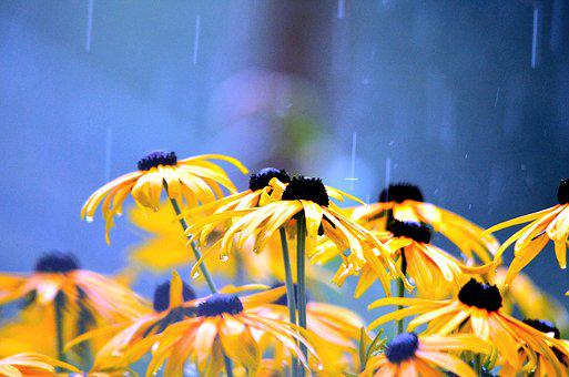Flowers, Rainy Weather, Flower, Wet
