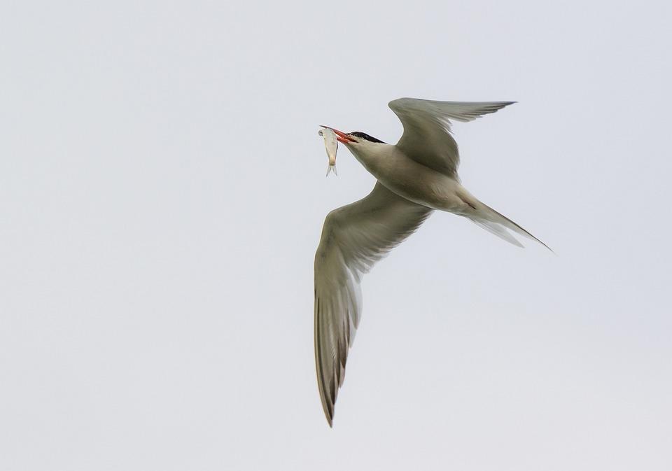 Peculiaridades de las aves acuáticas