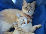 kitten, pussy