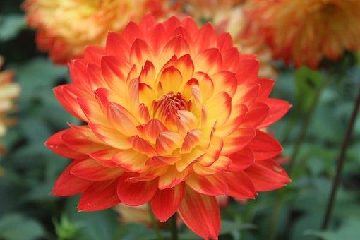 Fleurs, Lumineux, Red, Orange, Jaune