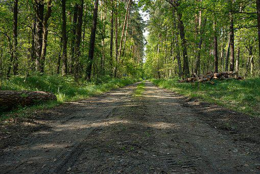Forest, Lets Go, Way, Sandy Road
