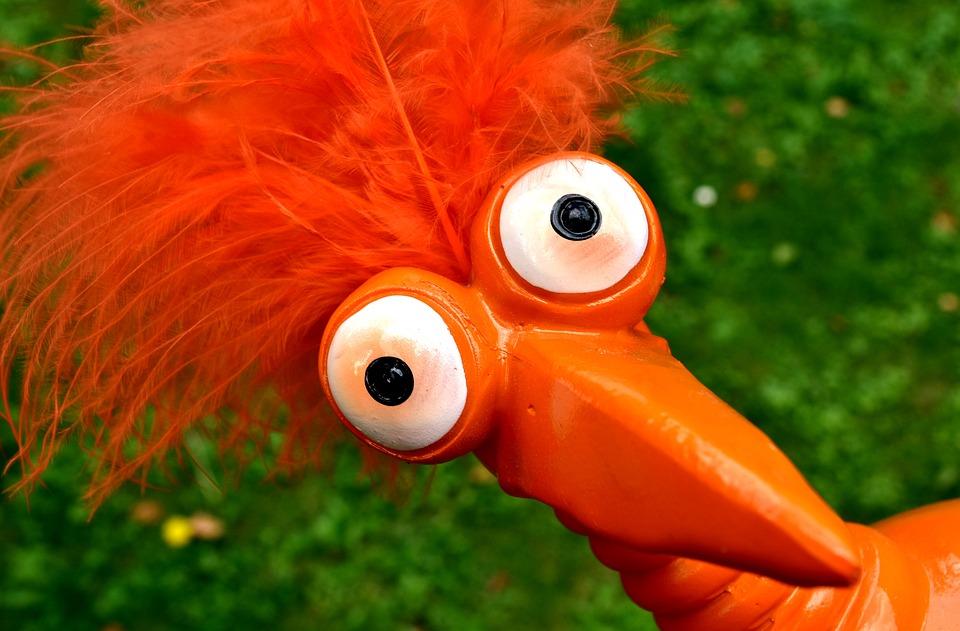 Weird bird cute funny free photo on pixabay - Funny bird pics ...