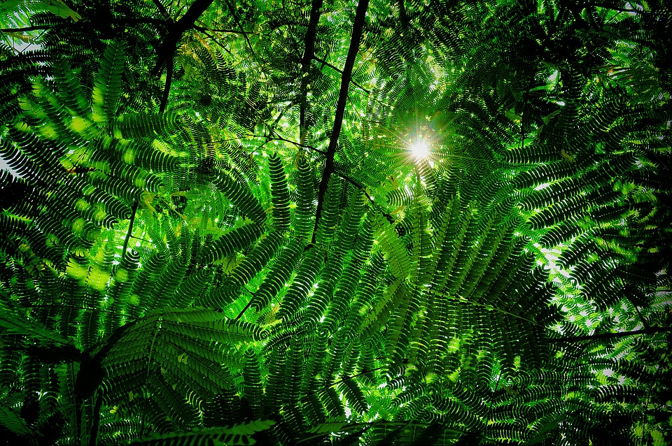 Acacia Leaves Green Free Photo On Pixabay