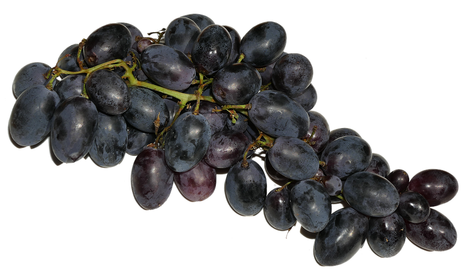 blue grapes images pixabay download free pictures
