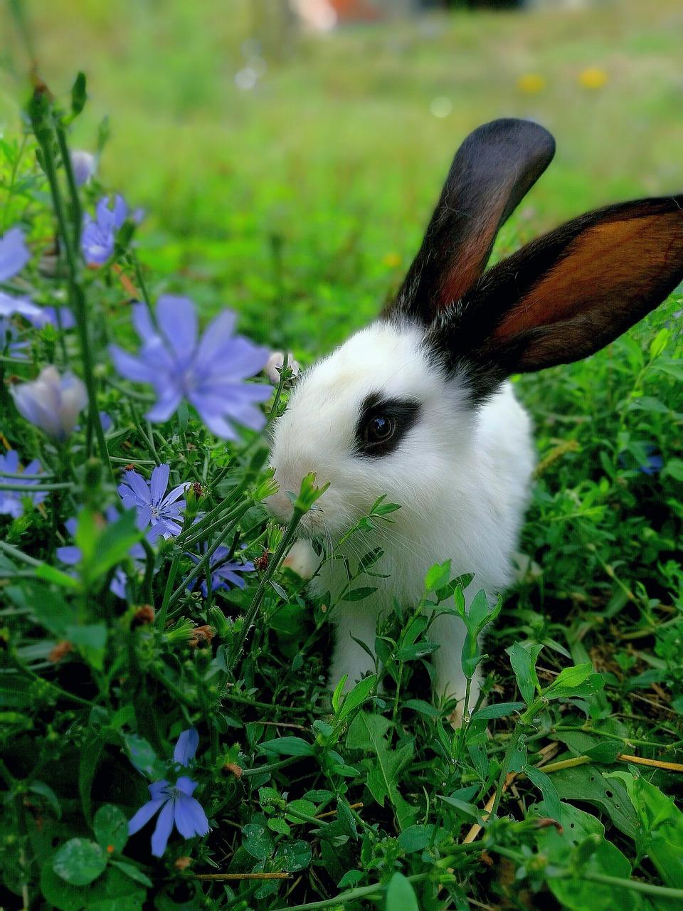 Картинки домашних кролики