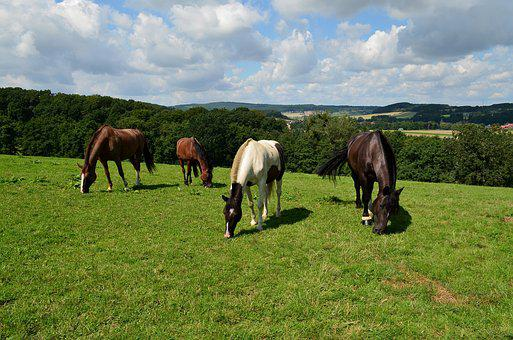 Horses, Horse Meadow, Wild Horses