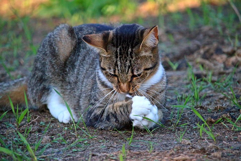 Kočička a kořist