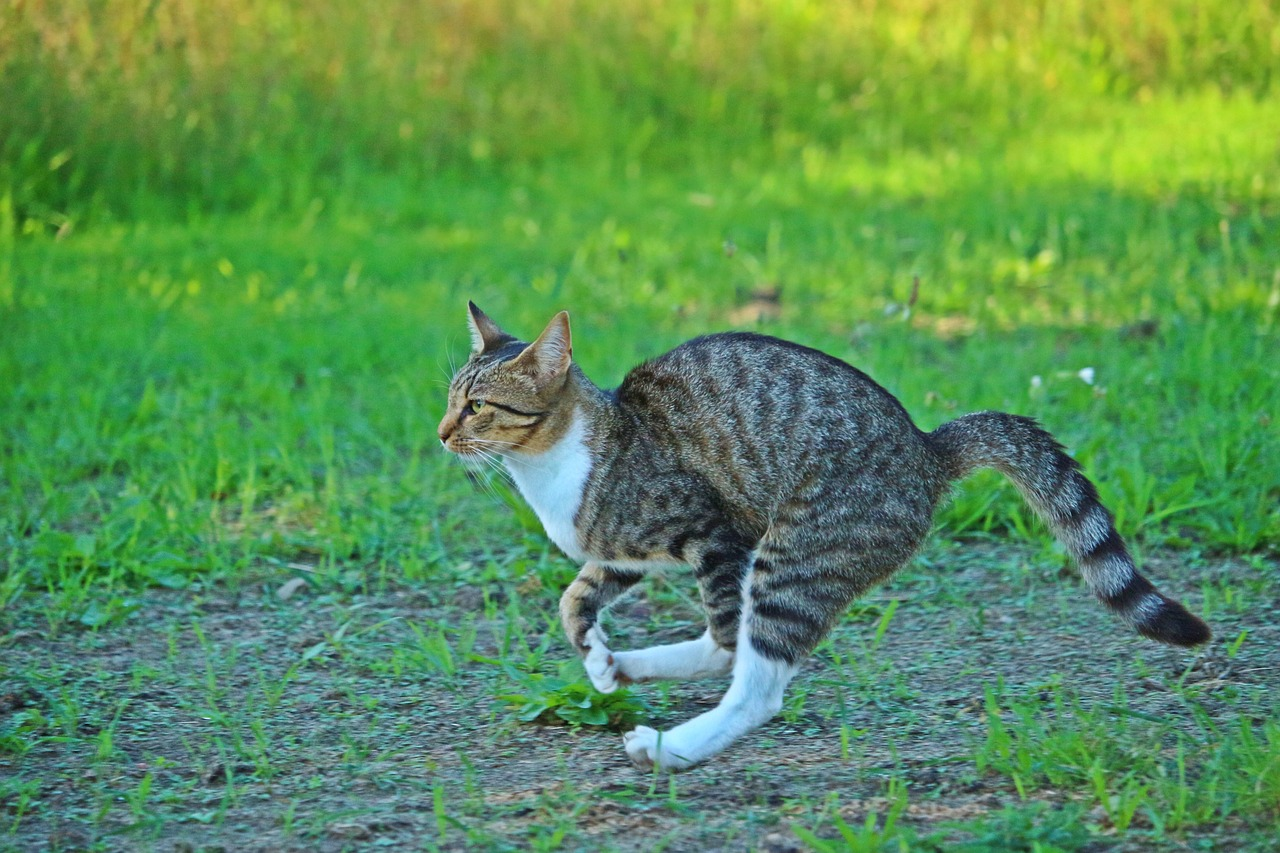 all about tabby kittens
