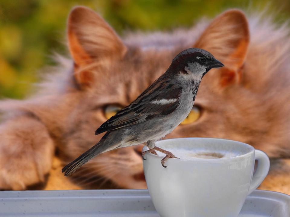 Sparrow, Bird, Coffee, Cup, Cat, Lurking