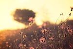nature, field, wild