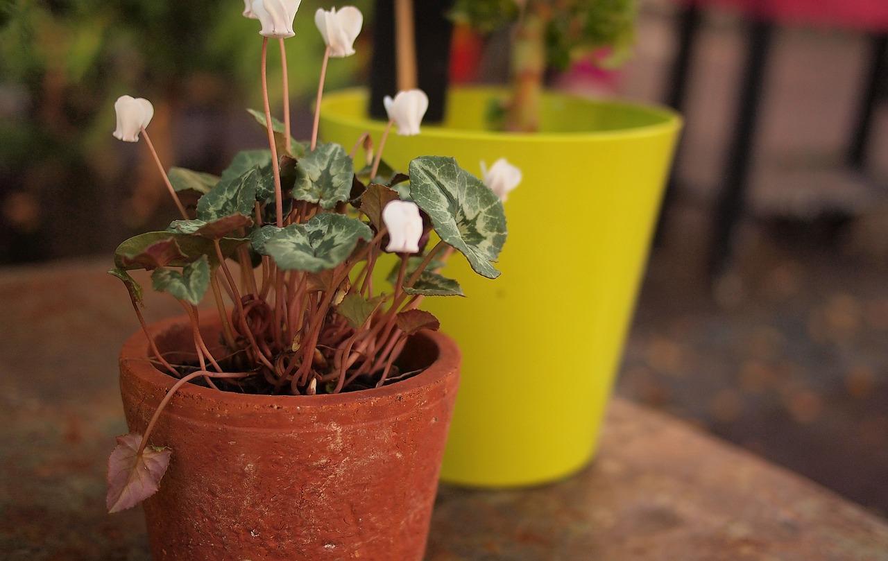 Комнатные цветы фото названия пересадка