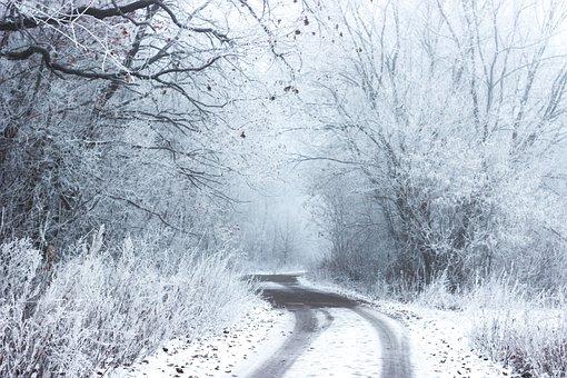 雪, 冬, 冷, 道路, 農村, 田舎, 木, 茂み, 森林, 林, 自然