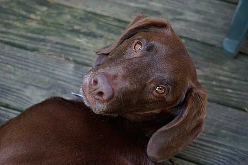 Dog, Pet, Animal, Cute, Canine, Mammal