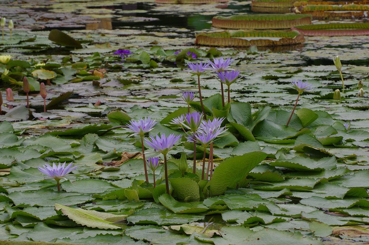 билет эконом водные растения средней полосы россии фото периферии