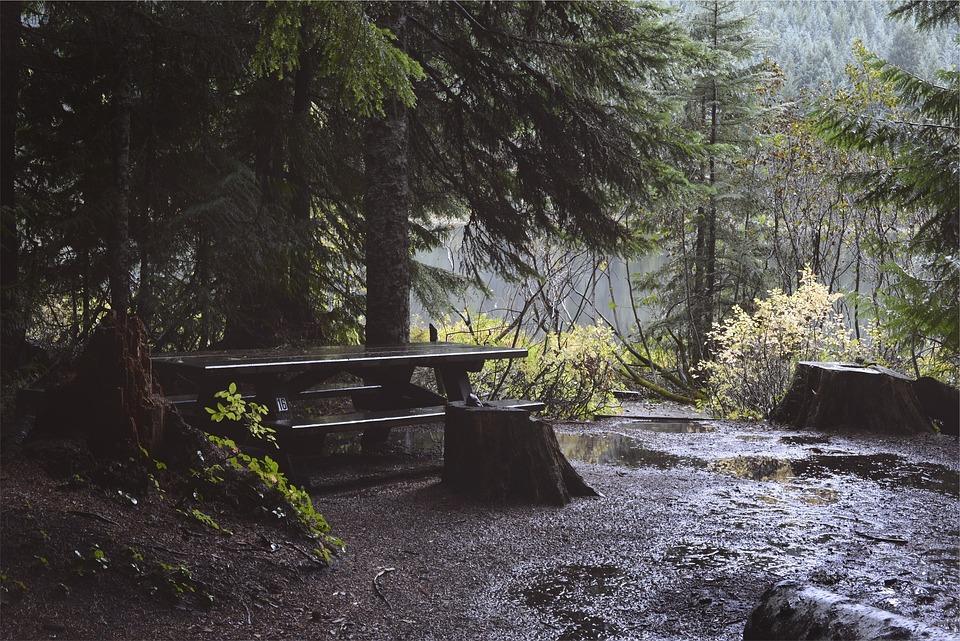 Picnic Table, Raining, Wet, Trees, Mud, Dirt, Nature