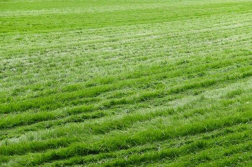 Lawn, Grass, Sward, Green, Garden