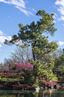 100+ Free Japanese Zen Garden & Zen Images - Pixabay