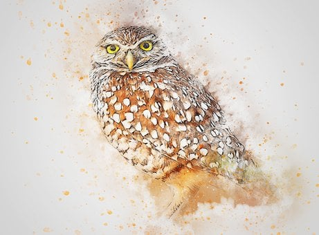 Vogel, Tier, Eule Art, Abstrakt