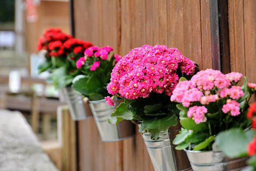 hanging flowers images pixabay download free pictures
