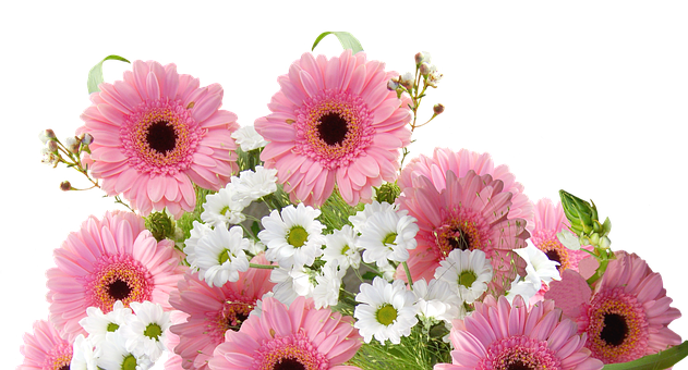 Gerbera, Schnittblume, Rose, Fleur