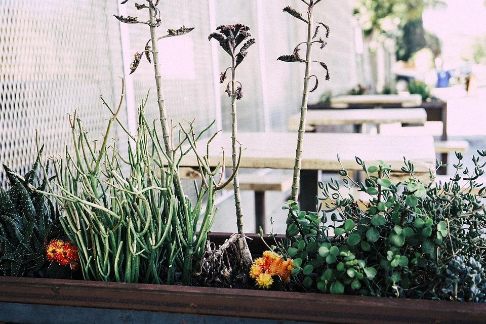 mini horta em apartamento