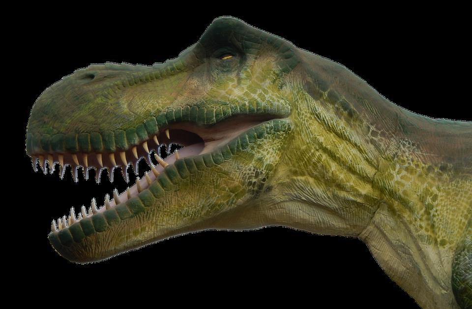 dinosaurier bilder zum ausdrucken farbig  dinosaur