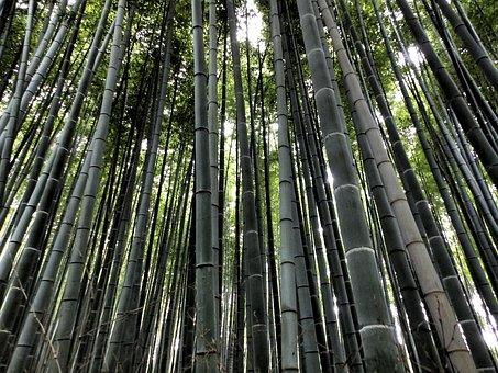 Bambuswald Bilder Pixabay Kostenlose Bilder Herunterladen