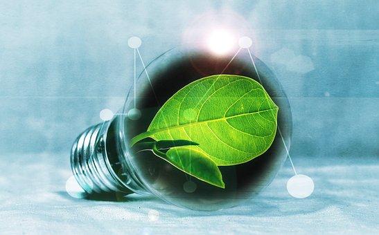 Ampoule, Feuille, Chlorophylle, Vert