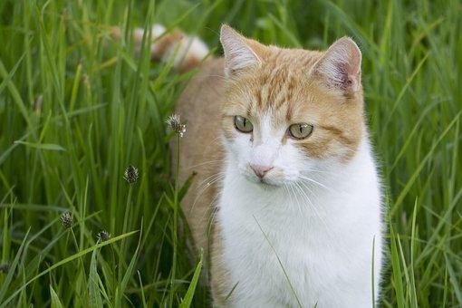 chlpaté mačička zrelé obrázky