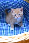 kitten, cart, sweet