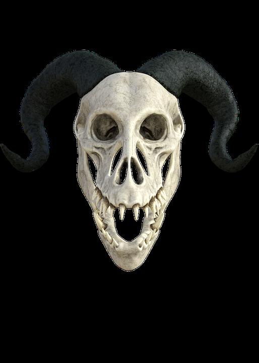 Skeleton Anatomy Skull · Free photo on Pixabay