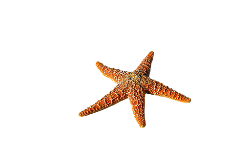 Starfish free pictures on pixabay for Etoile de mer deco