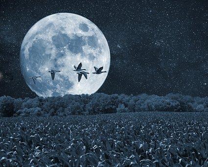 泊, 月, 鳥, 風景, 木, 芸術, 美術印刷, デジタル アート
