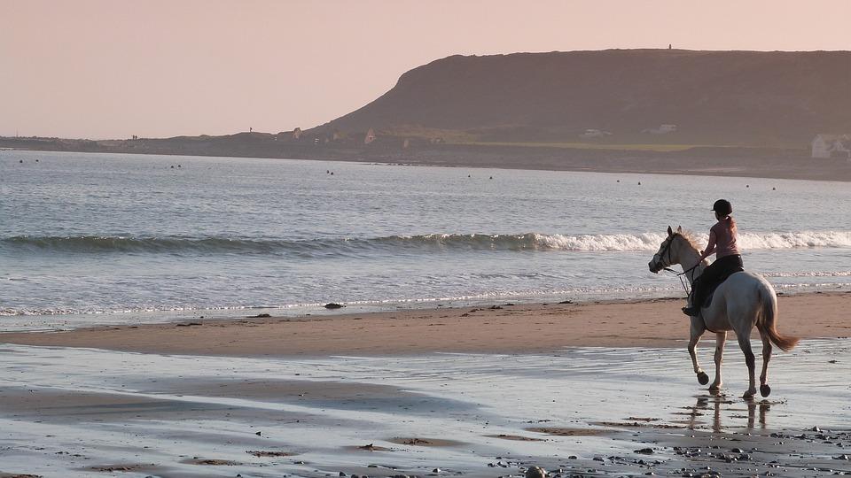 Ló, Beach, Homok, Tengeri, Természet, Ocean, Víz, Nyár
