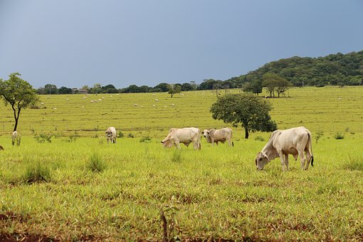 Campo, Agricultura, Agronegócio